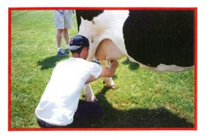 2000 Cow Flop 2